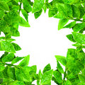 Frame From Green Leafs  Stock Photo - 22294160