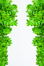 Frame From Green Leafs  Stock Photos - 22294273