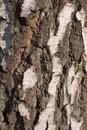 Birch Bark Texture Stock Photos - 2232333