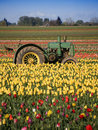 Tulip Farm Royalty Free Stock Images - 2234109