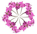 Wreath Out Of Pink Primula Stock Images - 2237174