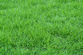 Fresh Grass Royalty Free Stock Images - 2242789