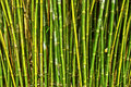 Bamboo Forest Stock Photos - 22445683