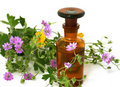 Bottle Of Essential Oil And Flowers Isolated On Wh Stock Photography - 22469842