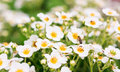 Strawberry Flowers Stock Images - 22487514