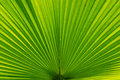 Textures Of Palm Frond Stock Photo - 22501880