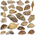 Collection Seashell Royalty Free Stock Photo - 22594445