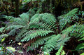 Ferns Stock Photography - 2261432