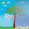 Four Seasons Tree Royalty Free Stock Image - 22646606