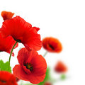 Garden Of Flowers - Red Poppies Stock Photos - 22675893
