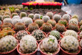 Cactus Royalty Free Stock Images - 22677059