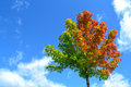Beautiful Tree Leaves Against A Blue Sky Stock Photos - 22733633