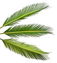 Palm Leaves Royalty Free Stock Photos - 22770248