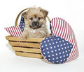Forth Of July Puppy Royalty Free Stock Photography - 22794917