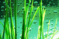 Dew-drop In Grass Royalty Free Stock Photo - 2284025