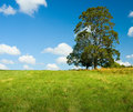 Lonely Tree In A Green Field Royalty Free Stock Photo - 2285155
