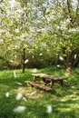 Spring Picnic Table Stock Photography - 2288372