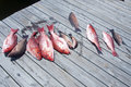 Catch Of The Day Stock Photo - 22808260