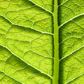 Green Leaf Texture Stock Photo - 22841950
