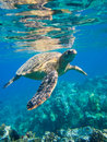 Sea Turtle Stock Images - 22872084