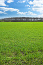 Green Field A Sunny Day Royalty Free Stock Photography - 2294257