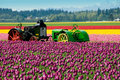 Tractors In The Tulips Stock Photography - 2298662