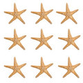 Large Starfish Background Royalty Free Stock Images - 2299089