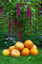 A Pile Of Pumpkins And Amaranth Plant Stock Photography - 23016782