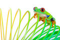 Red Eyed Tree Frog On A Spring Toy Stock Image - 23053581
