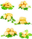 Collection Of Young Potatoes, Parsley . Isolated Stock Images - 23065754