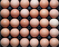 Close Up Of Eggs In Plastic Container Stock Photography - 23089102