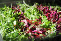 Gorgeous Microgreens Stock Images - 23132744