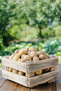 Potatoes Stock Images - 23208184