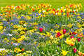 Colorful Tulips On Flowerbed. Outdoors Garden Stock Photography - 23216972
