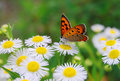 Butterfly Royalty Free Stock Photo - 23220335