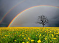 Field And Dead Tree Under Cloudy Sky With Rainbow Stock Photography - 23222442