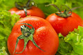 Tomatoes Among  Lettuce Royalty Free Stock Photos - 23267778