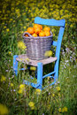 Basket Of Oranges In Yellow Flowers 4 Royalty Free Stock Photo - 23280845