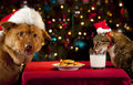Cat And Dog Taking Over Santa S Cookies And Milk Royalty Free Stock Photo - 23303555