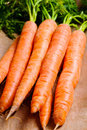 Bunch Of Natural Carrots Royalty Free Stock Photo - 23313565