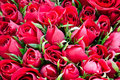 Red Roses Stock Image - 23327631