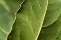 Abstract Background - Organic Green Leaves Stock Images - 23331344