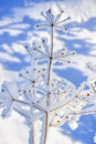Frozen Plant Royalty Free Stock Image - 23378776