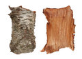 Birch Tree Bark Texture Stock Images - 23395564