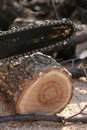 Saw And Sawdust Stock Photo - 2344130