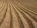 Ploughed Field Royalty Free Stock Photo - 2349775