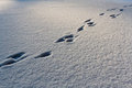 Footsteps On The Snow Stock Image - 23406751
