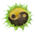 Sunflower With The Symbol Of Yin-yang Stock Photography - 23431772