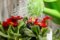 Close Up On Water Pouring From Watering Can Stock Image - 23446871