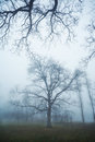 Tree In Fog Royalty Free Stock Photography - 23449777